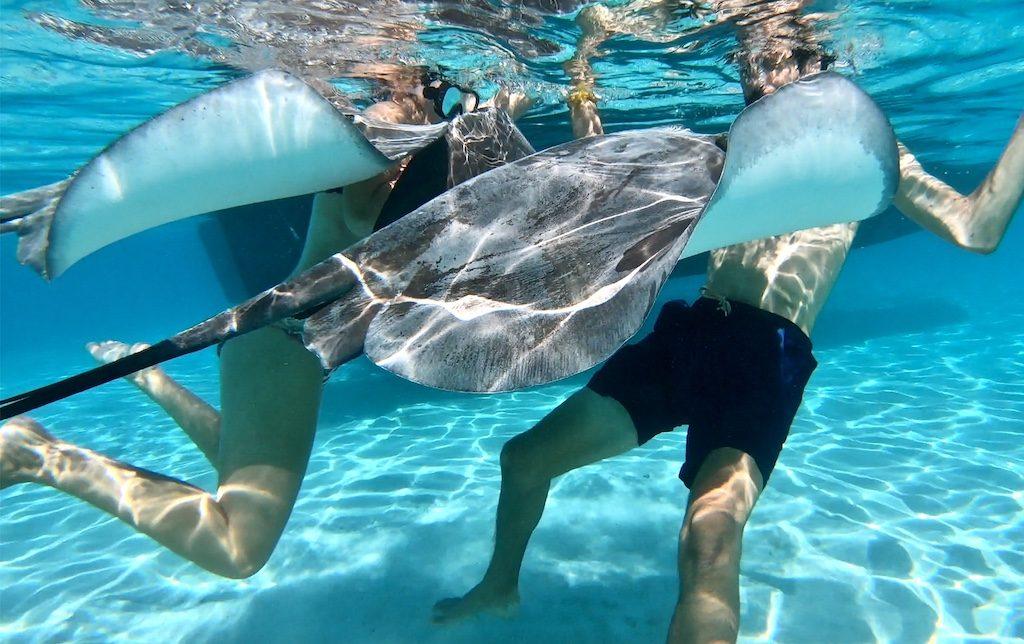 moorea raies requins parmi les plus beaux endroits du monde