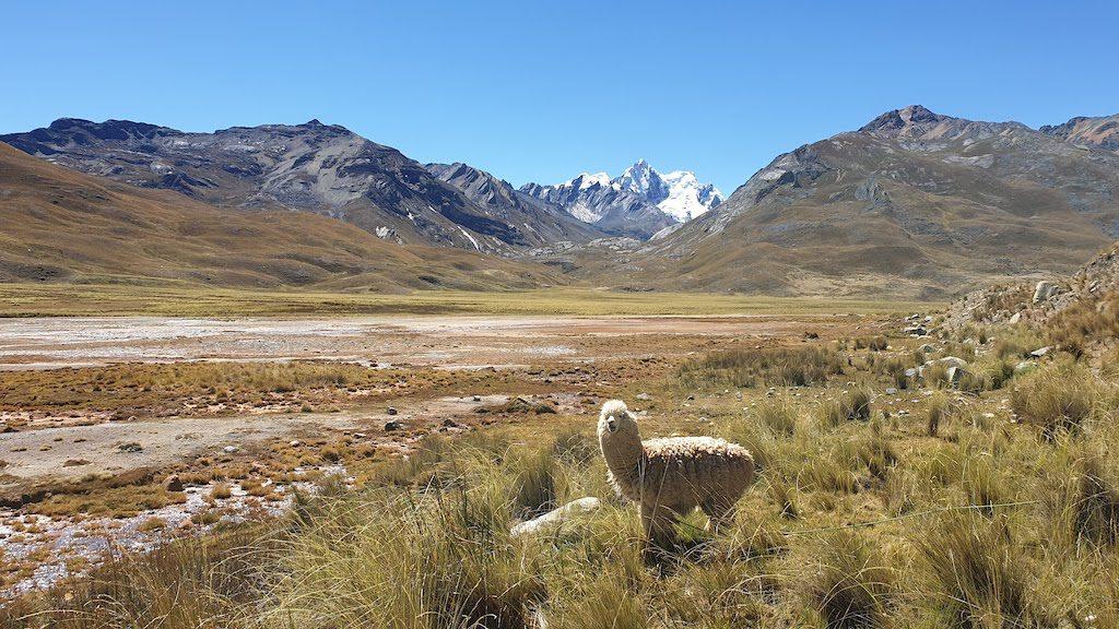 Excursion au glacier Pastoruri
