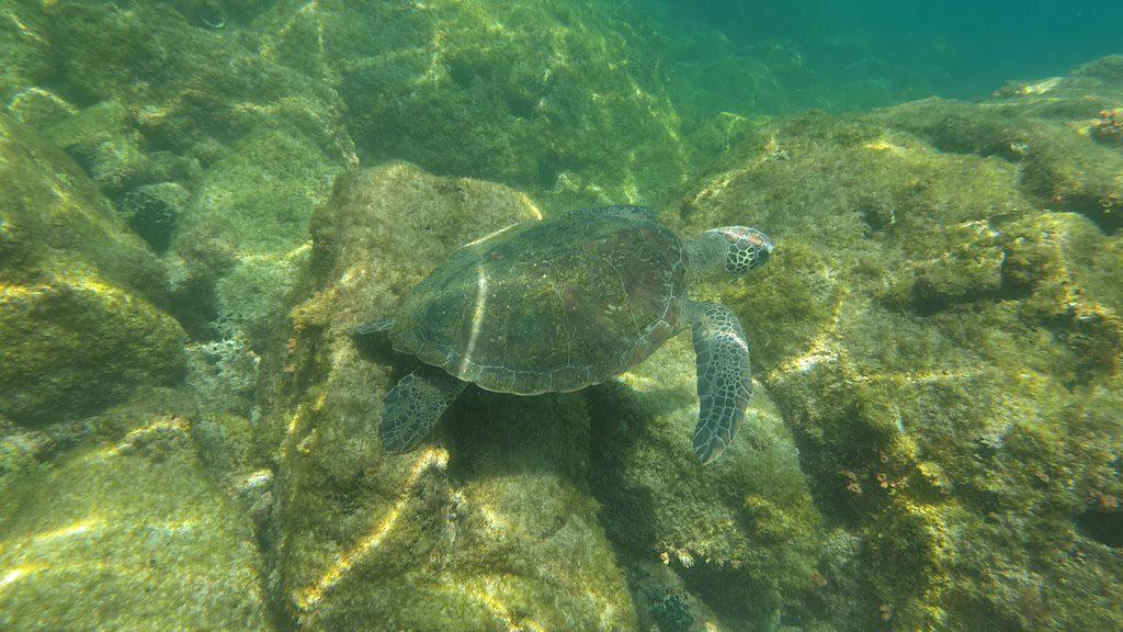 Tortue Lagoa Verde Ilha Grande
