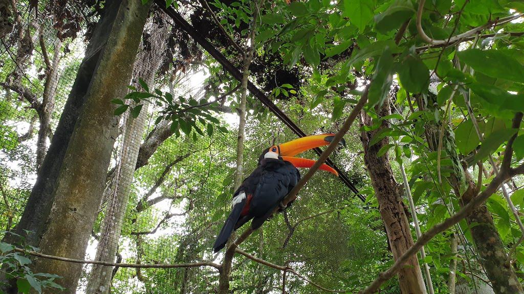 Parque das Aves à Foz do Iguaçu