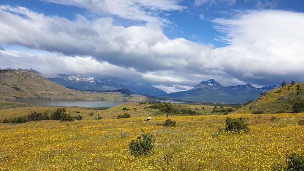 Pingo Salvaje Laguna Sofia Puerto Natales
